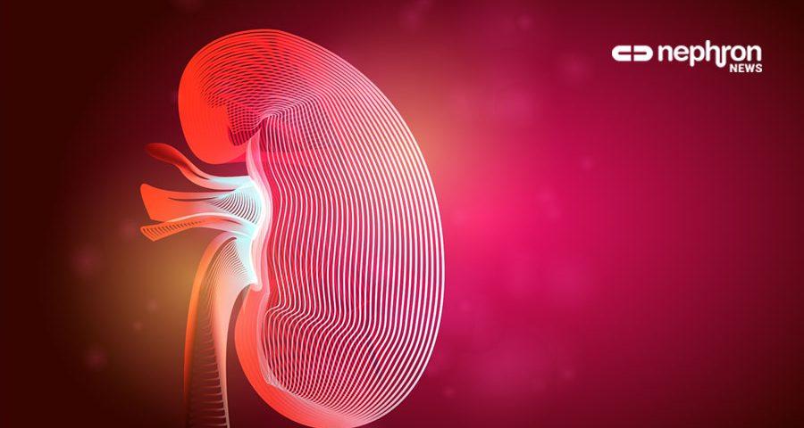 κόκκινο νεφρό