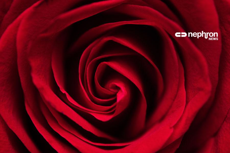 λεπτομέρεια τριαντάφυλλου