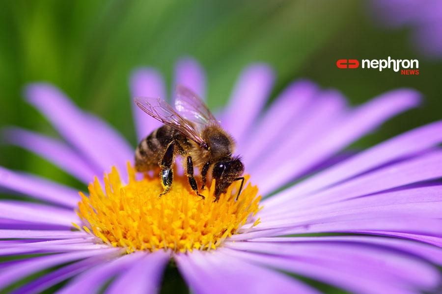 μέλισσα σε λουλούδι
